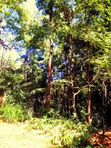 Arboleda de Pha Sua Waterfall