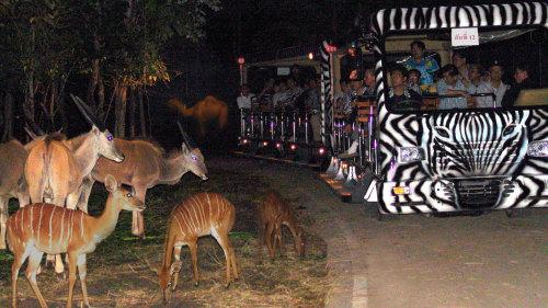 Night Safari Chiang Mai