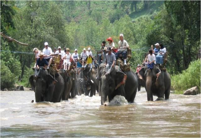 Un día en elefante